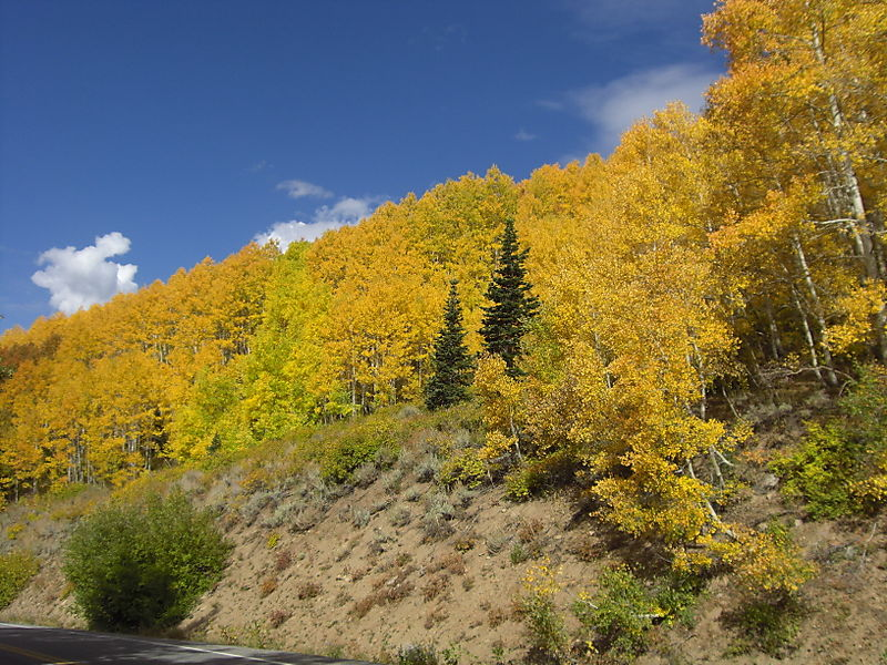 Early fall 022