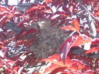 Nest_001_2
