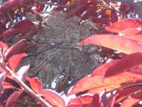 Nest_002