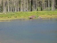 Beavers_002