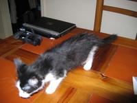 Kitten_001