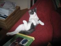 Kitties_017