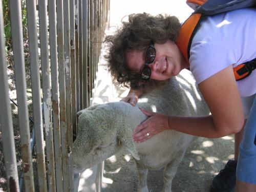 Hugging a Sheep